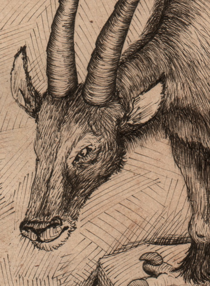 detail of the graphorn