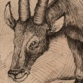 preview of  a graphorn plate